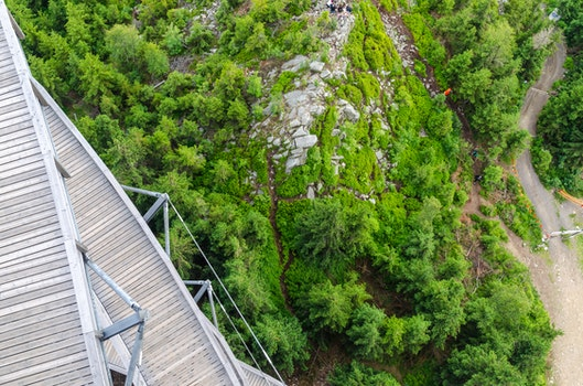 Free stock photo of nature, forest, trees, railings