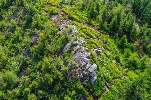 Free stock photo of nature, rocks, forest, trees