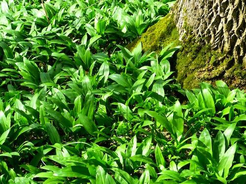 Kostnadsfri bild av gräs, grön, miljö, mossa