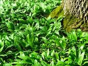 nature, grass, moss