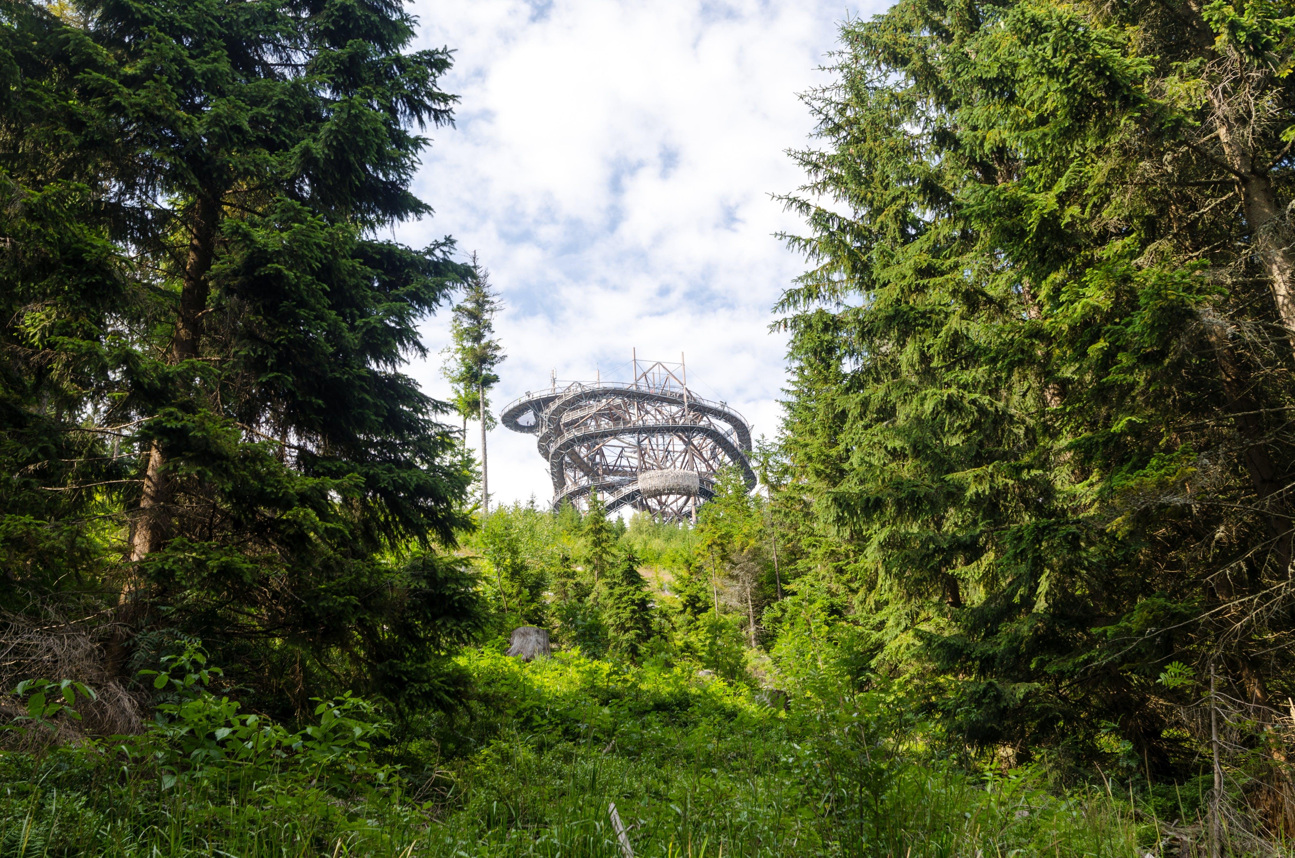 Forest Beside Amusement Park