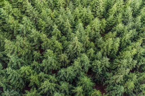 Aerial Photography of Green Pines