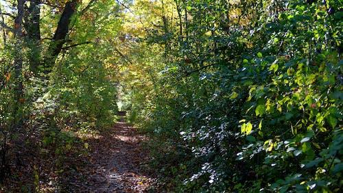 Gratis arkivbilde med blader, fottur, løype, skog