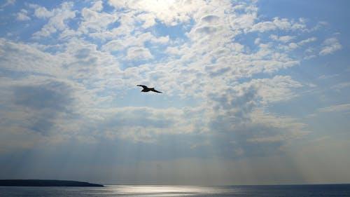 Kostenloses Stock Foto zu fliegen, himmel, möwe, sonnenstrahlen