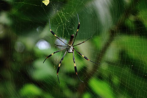 A Close-Up Shot of a Spider on a Wed