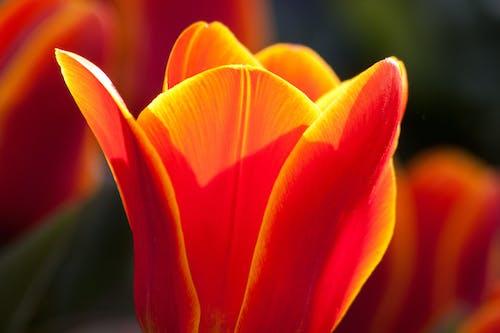 Selective Focus Photography of Orange Flower