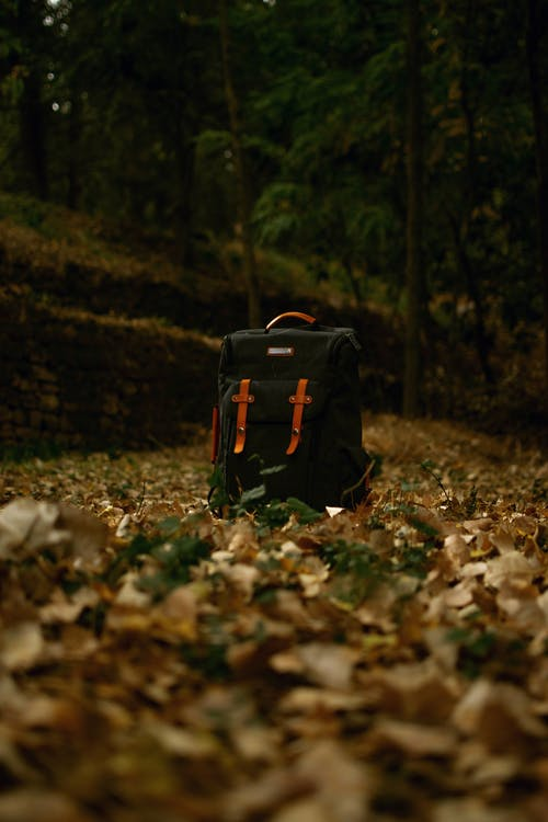 Black and Red Backpack on Dried Leaves