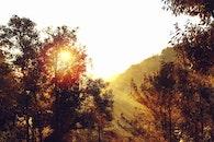 light, dawn, nature