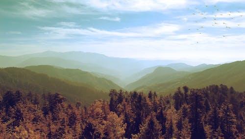 Darmowe zdjęcie z galerii z drzewa, góra, himalaje, indie