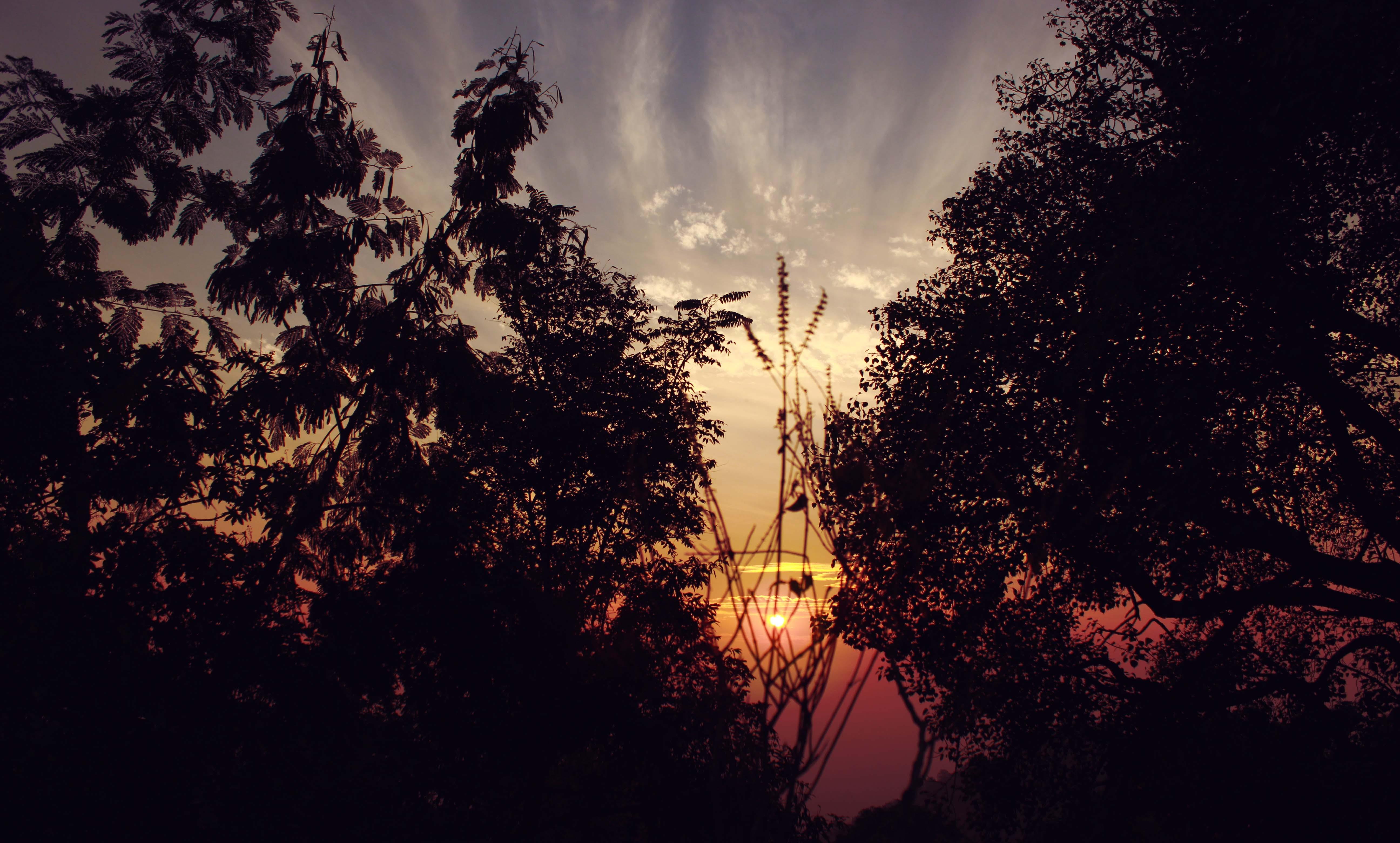 Black Trees during Sunrise