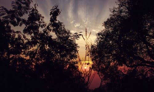 Ảnh lưu trữ miễn phí về ánh sáng, bầu trời, bầu trời đầy kịch tính, bình minh