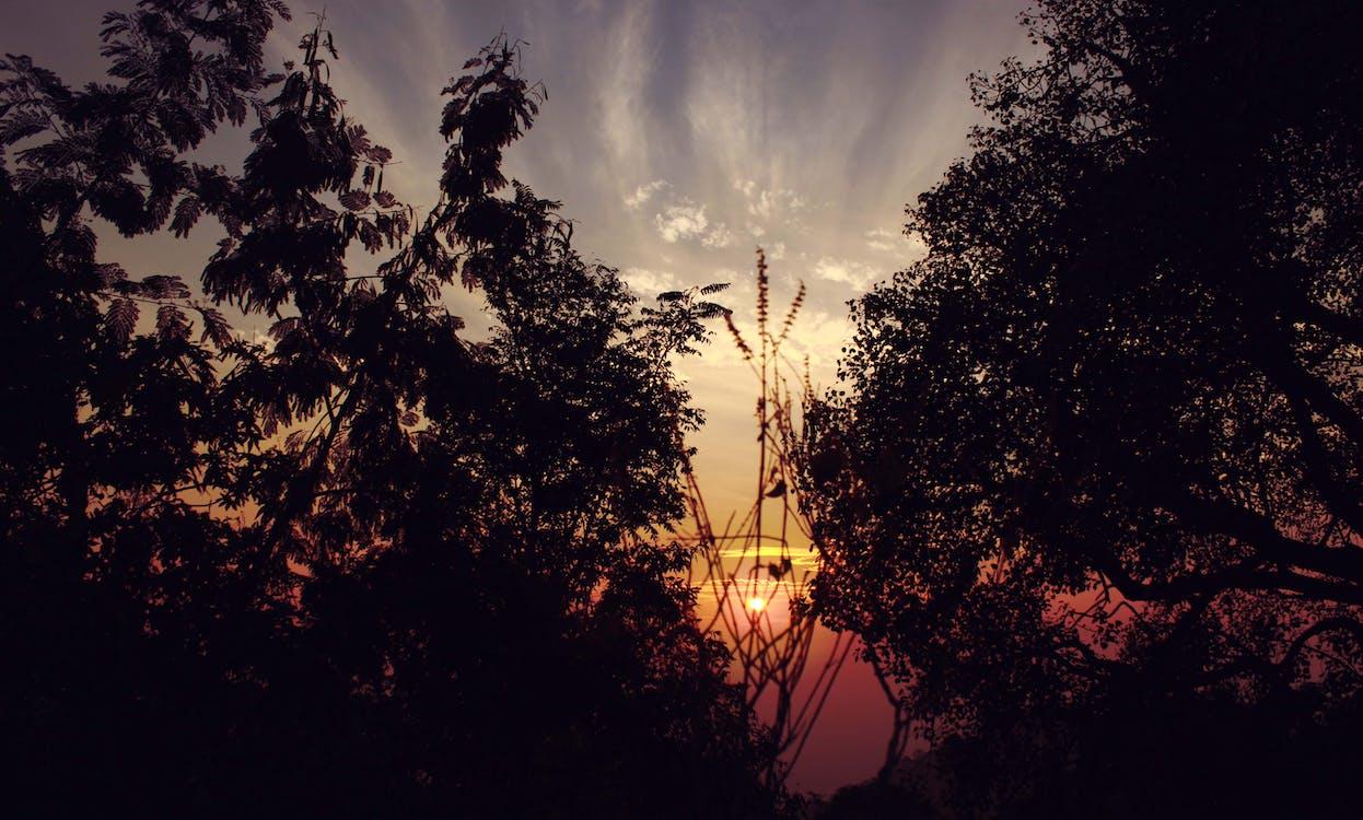 apus, arbori, backlit
