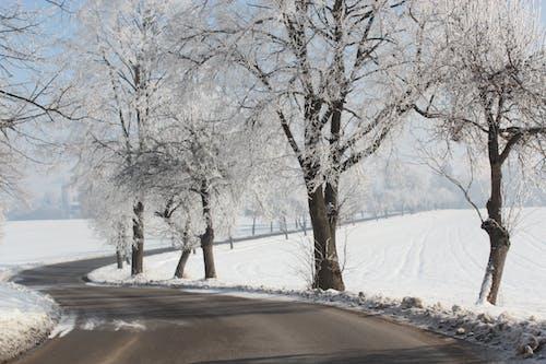 คลังภาพถ่ายฟรี ของ ต้นไม้, ถนน, ภูมิทัศน์ฤดูหนาว, มัว