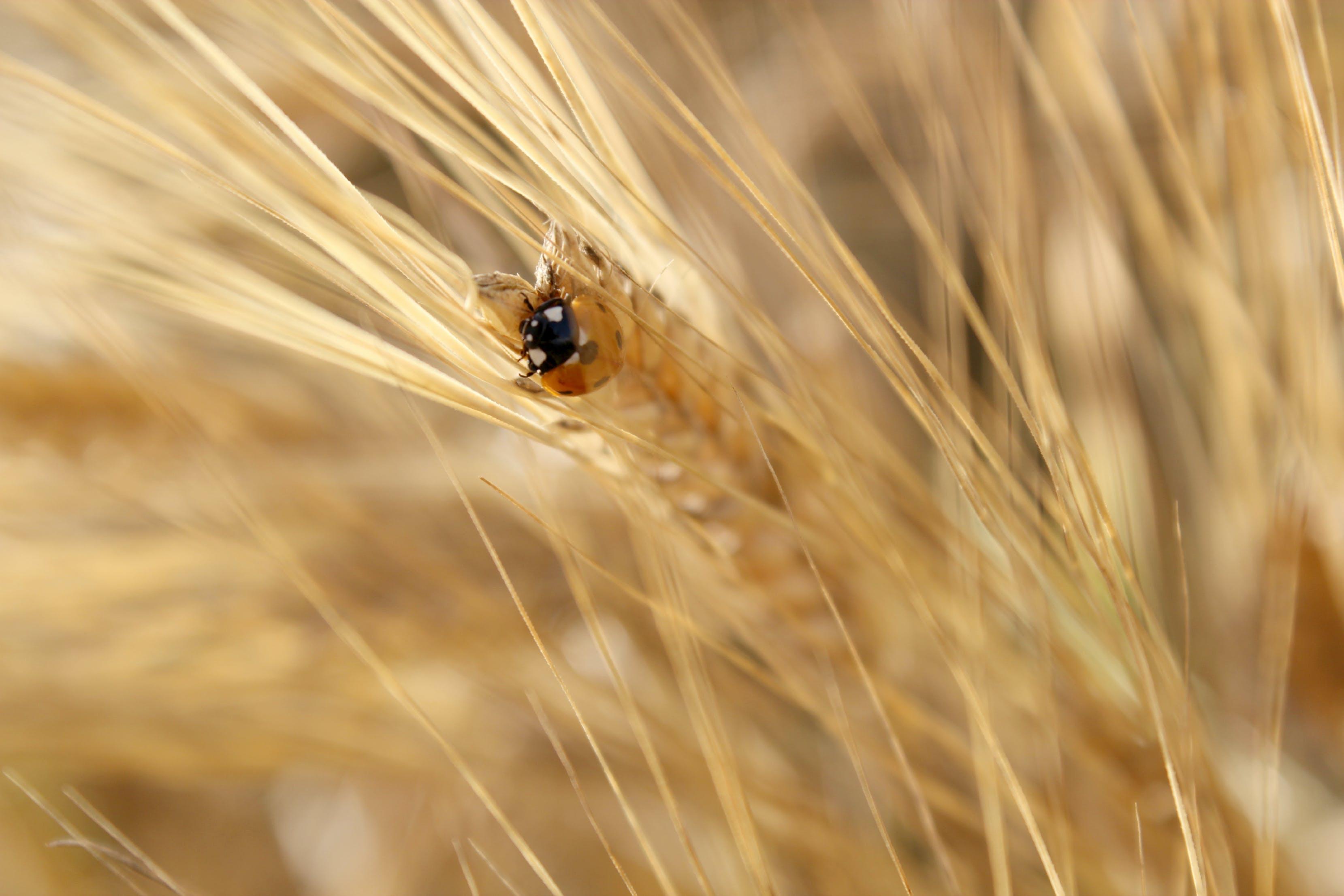 Free stock photo of bug, field, ladybug, macro photo
