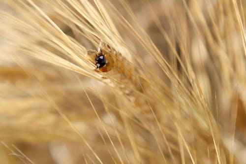 Free stock photo of bug, field, ladybug