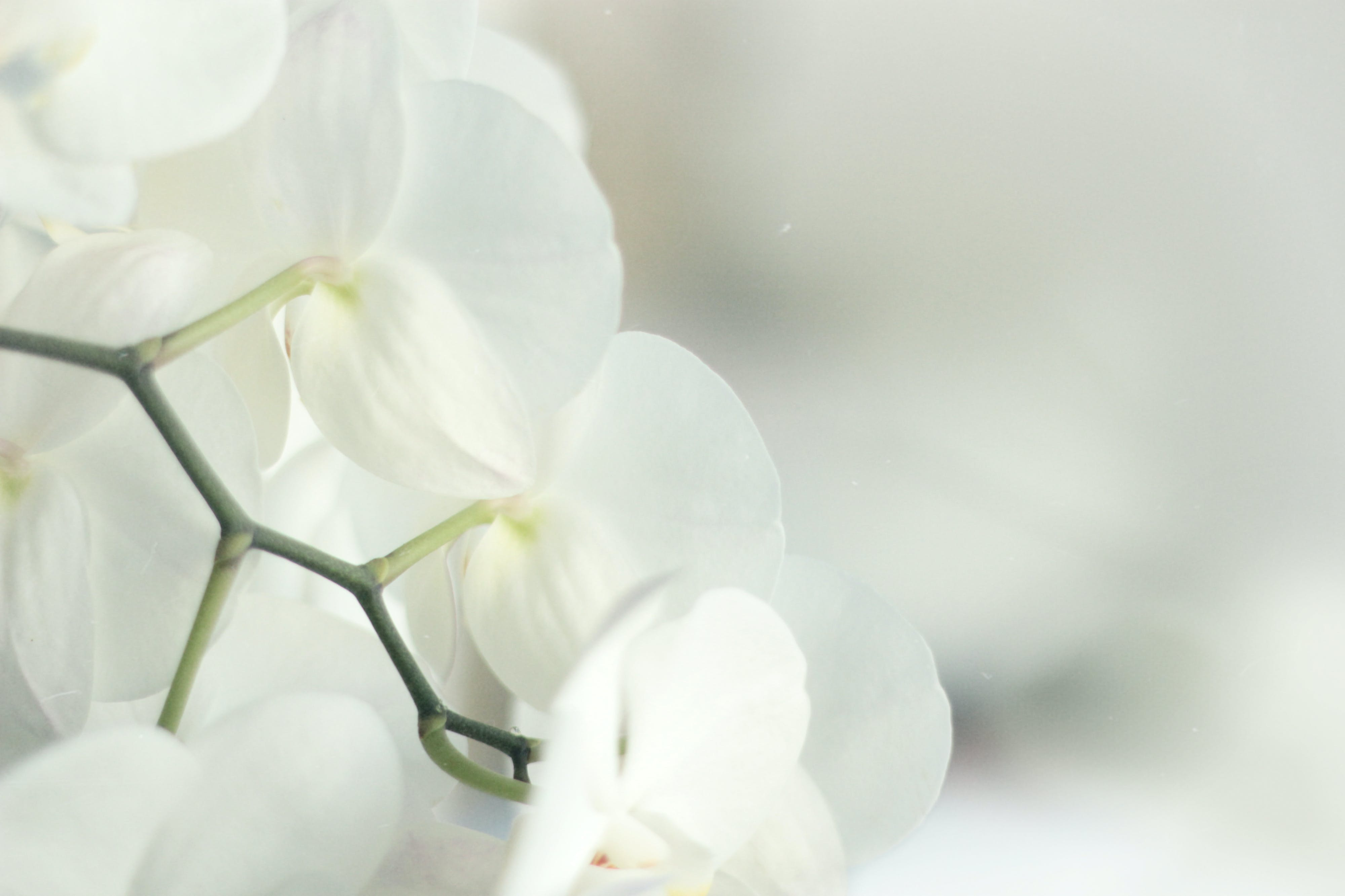 Free stock photo of beautiful, flower, garden, home