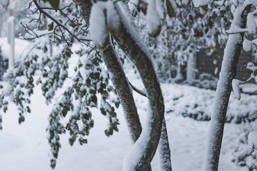 Gratis arkivbilde med første snøfall, snø, snøfall