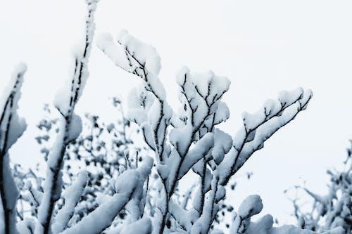 Gratis arkivbilde med snø på treet