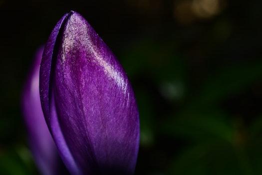 Photo of Purple Petaled Flower