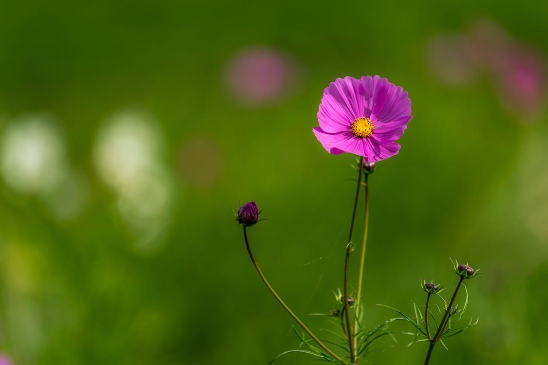 Blooming pink flower growing in green field