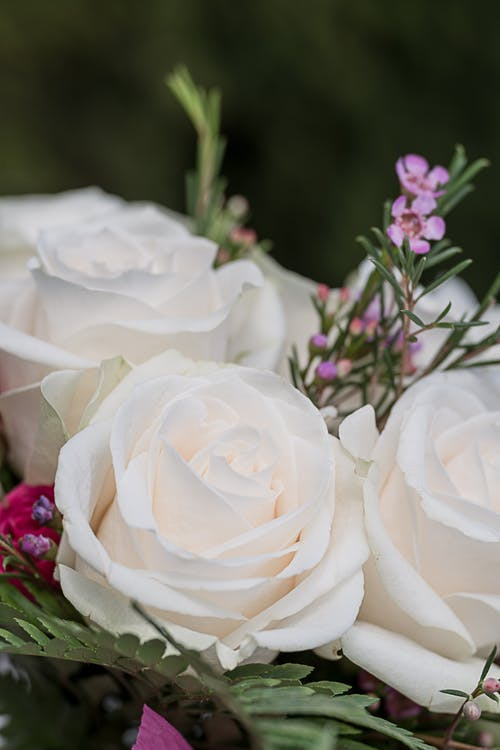 Bunch of white roses with fern leaves