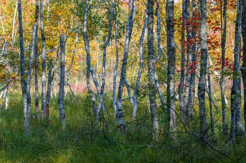 Autumn forest with colorful foliage in sunlight