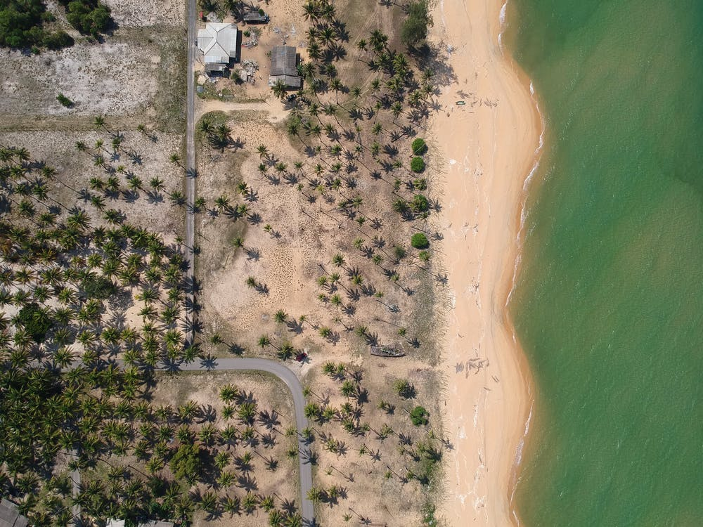 Aerial Photography of Seashore With Coconut Trees