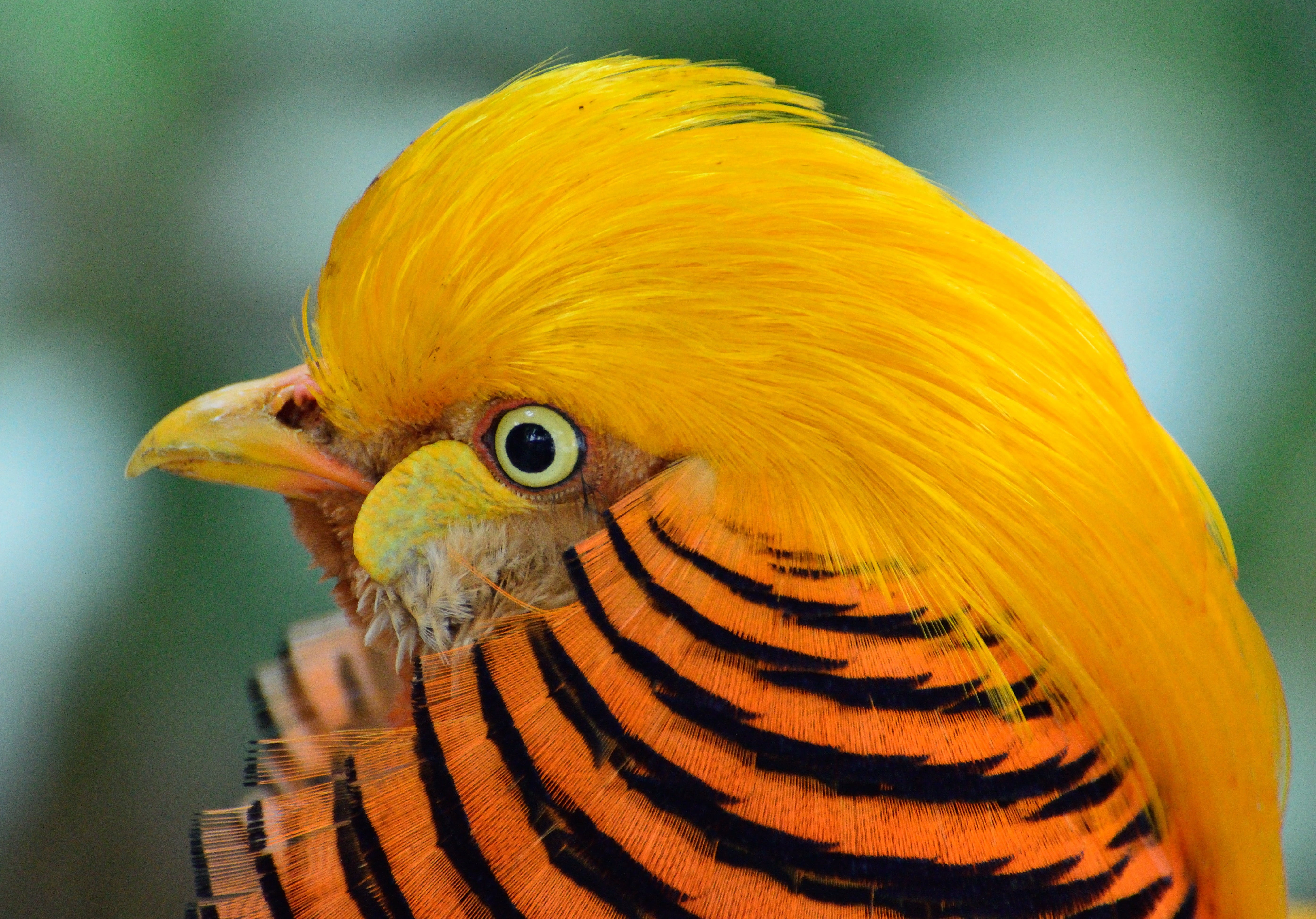 Yellow Black and Orange Bird Head