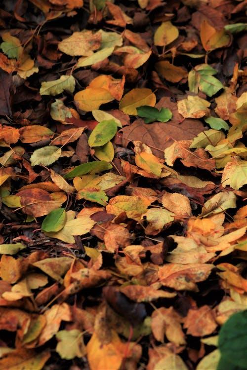 Immagine gratuita di autunno, cadere, foglie