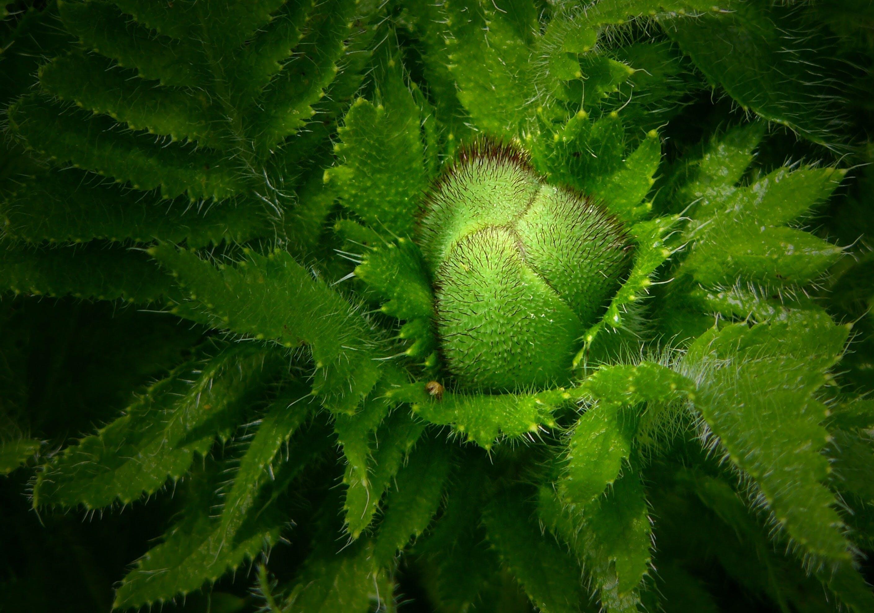 녹색, 식물, 자연, 클로즈업의 무료 스톡 사진