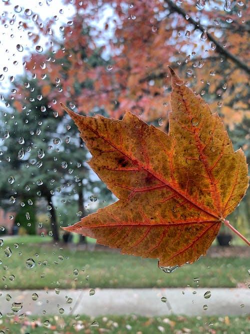 Free stock photo of autumn, autumn aesthetic, autumn atmosphere