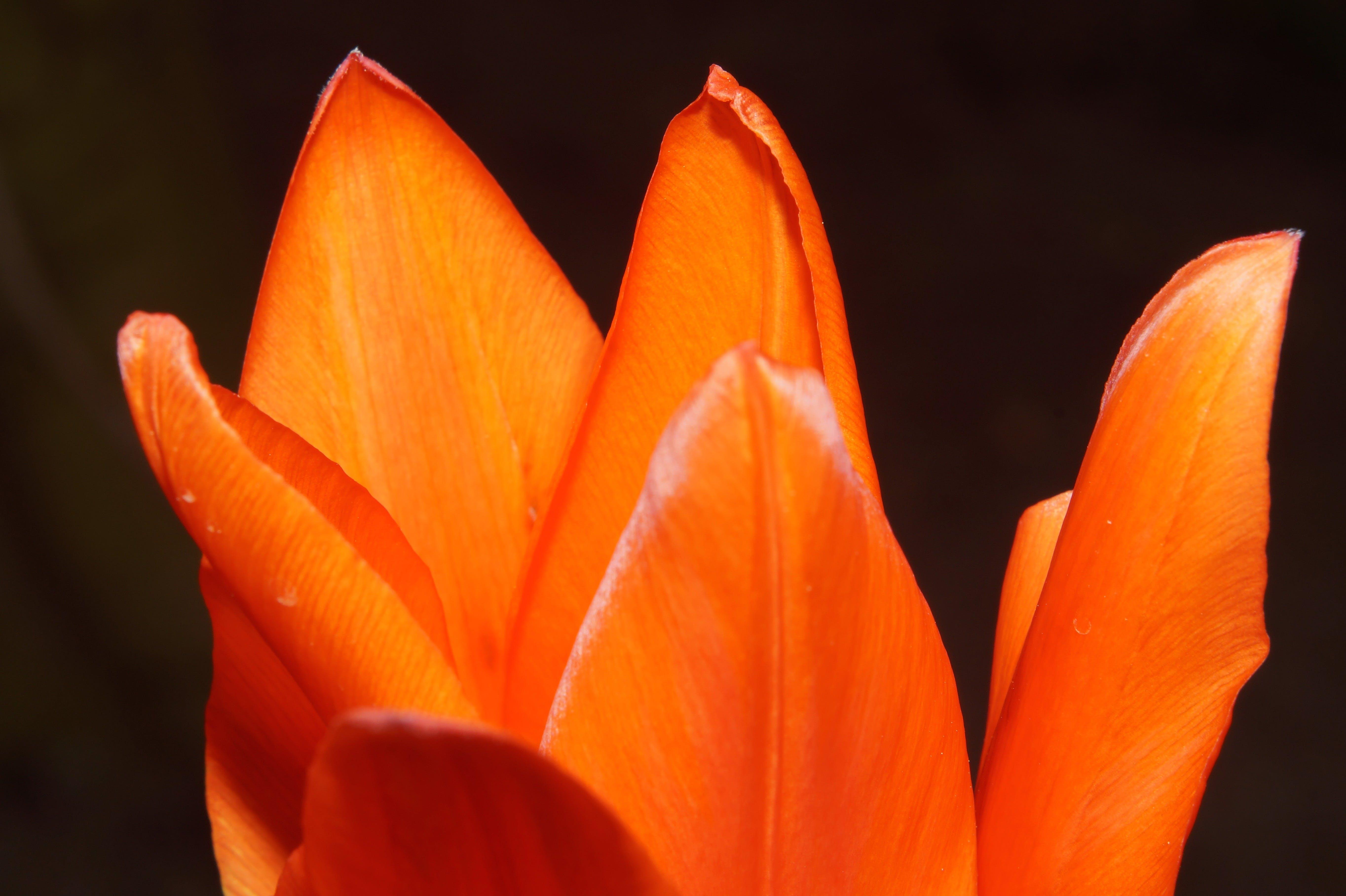 Orange Flower in Bloom