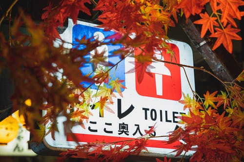 Colorful electric signboard showing public toilets hanging under trees with bright foliage in night