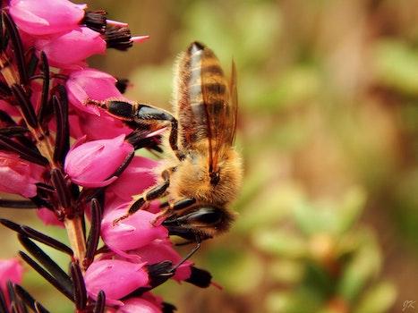 Close Up Photo of Honeybess Perching on Pink Flower Buds