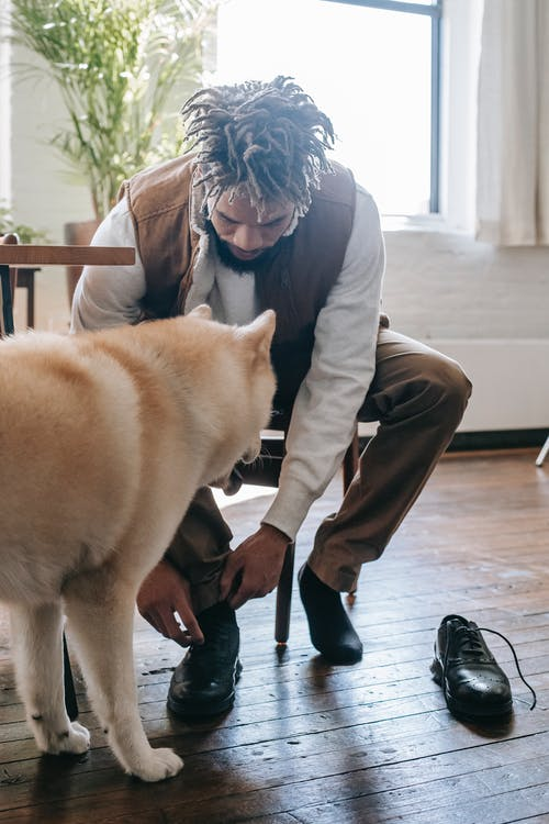 Young African American male in casual outfit sitting on chair near cute dog in light living room and lacing shoe