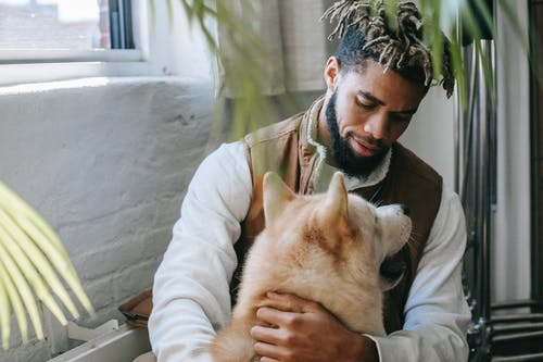 Trendy young bearded black man with Afro hairstyle sitting on haunches near window and hugging cute fluffy Akita dog