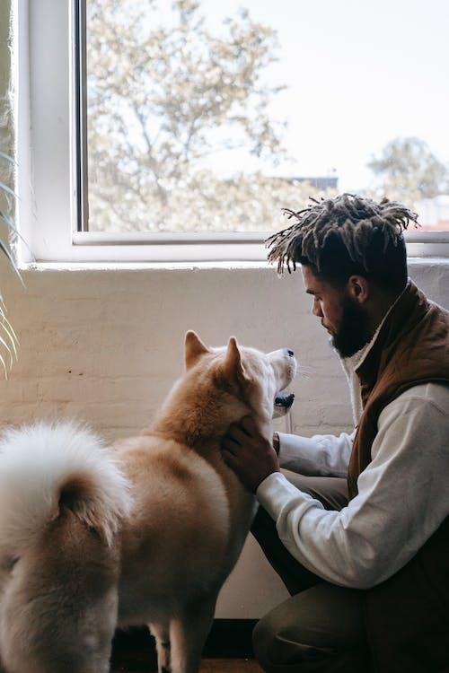 Young ethnic guy petting playful Akita dog in room