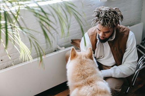 From above of concentrated young ethnic guy in stylish outfit playing with adorable Akita Inu dog while spending time together at home