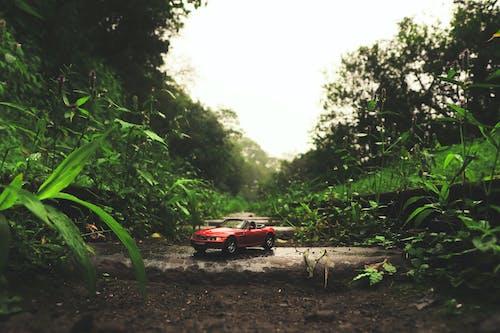 Ảnh lưu trữ miễn phí về BMW Z4, chiếc xe nhỏ, chuyển đổi, hình nền xe