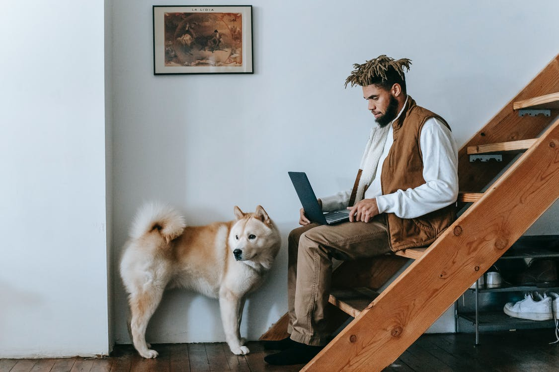 Side view of young African American male freelancer working remotely on laptop sitting on wooden staircase near adorable Akita dog at home