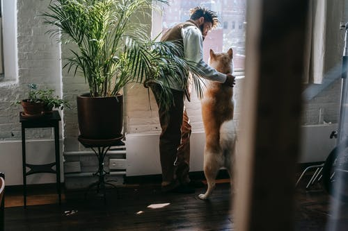 Young ethnic guy with curious dog looking out window