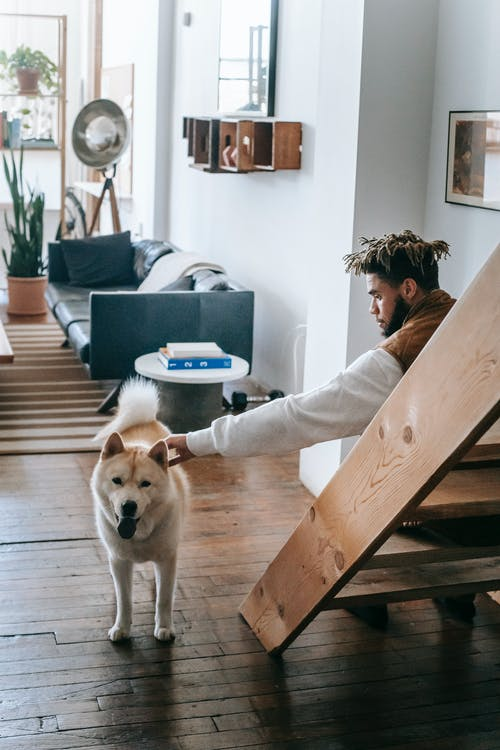 Side view of young black male with Afro hairstyle caressing cute Akita dog with tongue out while sitting on wooden stairs in cozy living room