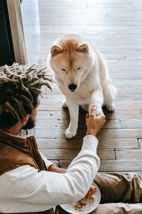 dog lover, dog education, positive dog behavior, dog parent, dog training