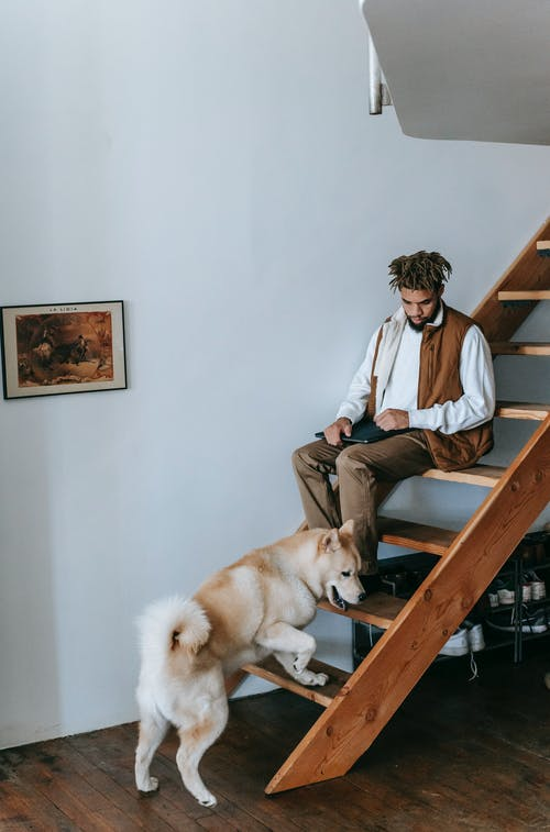 Young black guy and adorable Akita dog spending time on wooden stairs at home