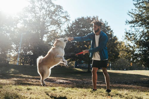 Young black man playing with dog during training in park