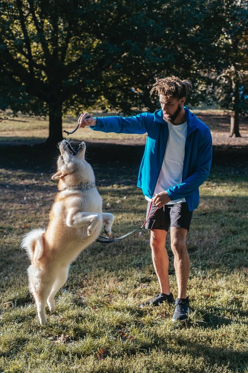 Young ethnic guy playing with purebred dog in park