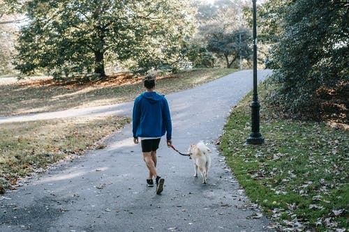 Anonymous guy with purebred dog walking in green park