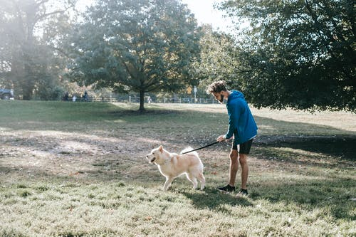 Side view of young African American man in activewear standing on grassy lawn with purebred dog on leash while spending time together in park
