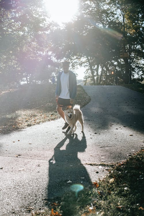 Unrecognizable man strolling along alley with dog
