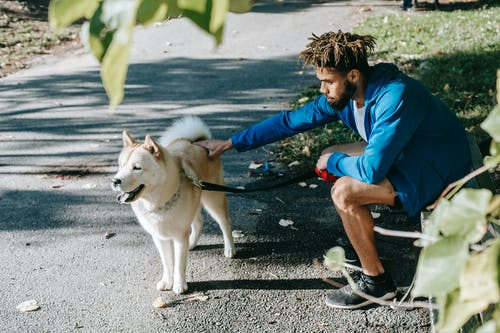 Young black male petting Akita dog after training in park